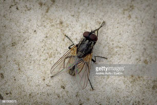 close-up of housefly on wall - andres ruffo stock-fotos und bilder