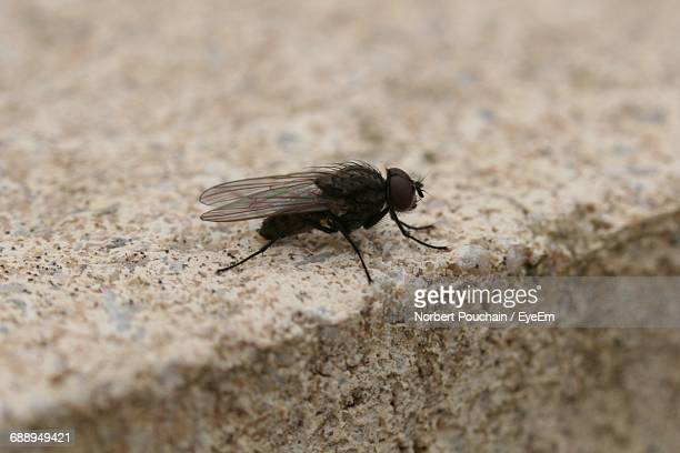 close-up of housefly outdoors - housefly stock pictures, royalty-free photos & images