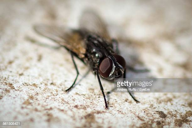 close-up of housefly - andres ruffo stock-fotos und bilder