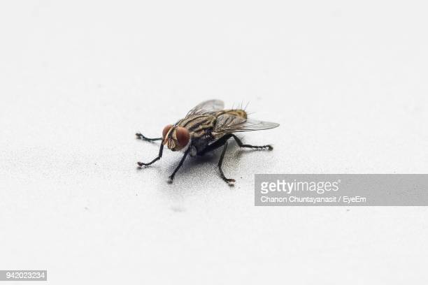 close-up of housefly - housefly stock pictures, royalty-free photos & images