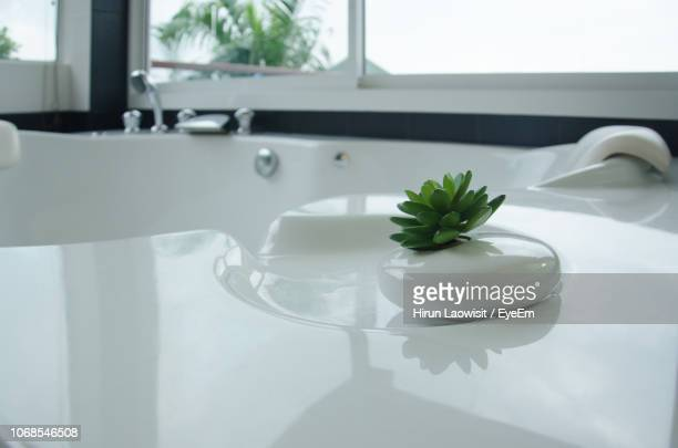 close-up of houseplant on bathtub - toilet planter stock pictures, royalty-free photos & images