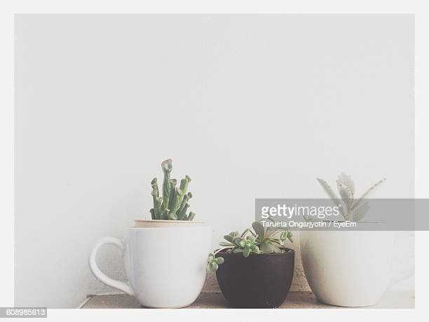 Close-Up Of Houseplants On Table Against White Wall