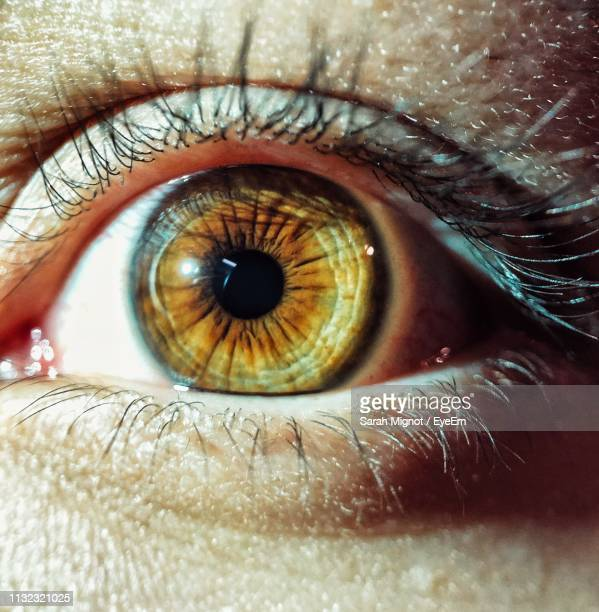 close-up of human eye - extreme close up stock pictures, royalty-free photos & images