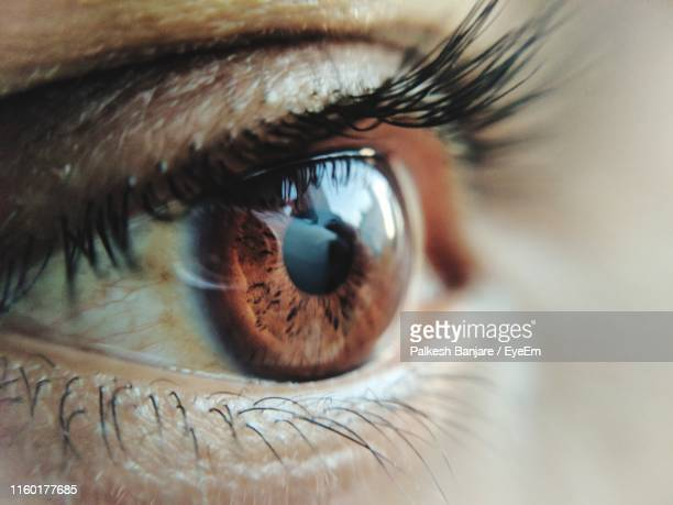 close-up of human eye - brown eyes stock photos and pictures