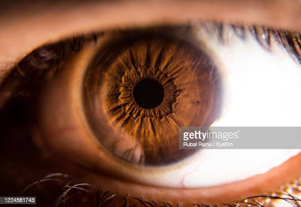 close-up of human eye - brown eyes stock pictures, royalty-free photos & images