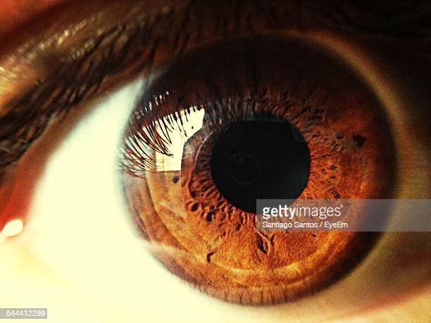 close-up of human eye - braune augen stock-fotos und bilder