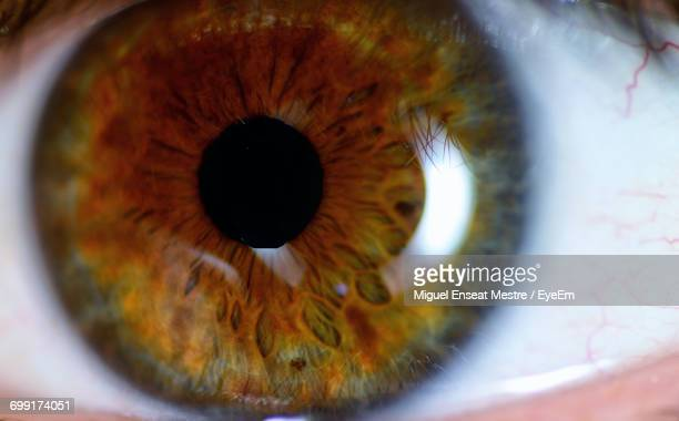 close-up of human eye - light brown eyes stock photos and pictures