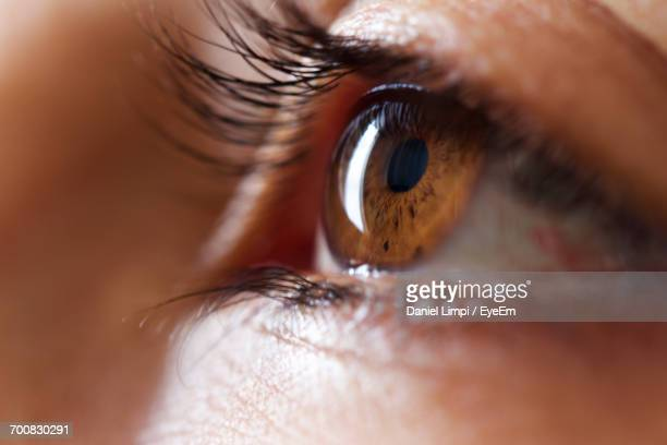 close-up of human eye - eyesight stock photos and pictures