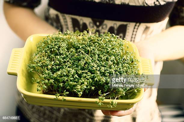 Close-Up Of Human Hand Holding Cress In Plastic Container