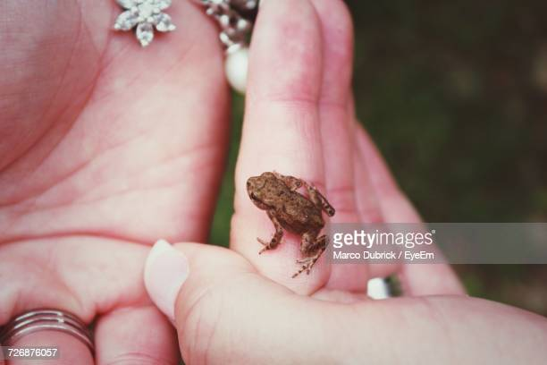 Close-Up Of Human Hand Holding Frog
