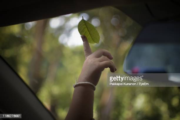 close-up of human hand touching leaf - unusual angle stock pictures, royalty-free photos & images