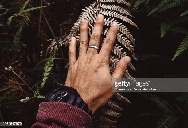 close-up of human hand touching plant - reality fernsehen stock pictures, royalty-free photos & images