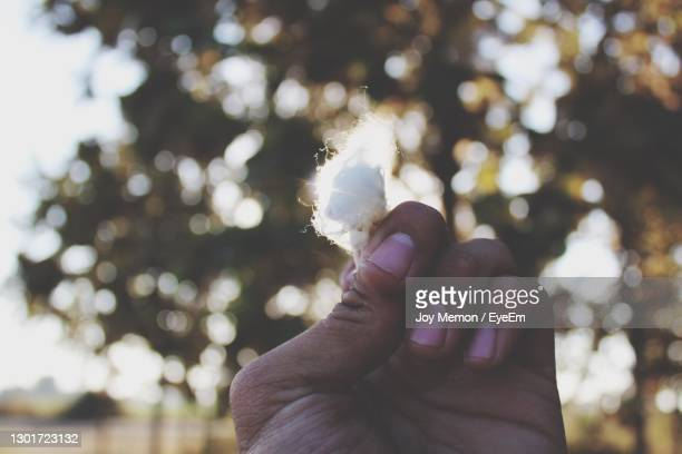 close-up of human hand with cotton - bookend stock pictures, royalty-free photos & images