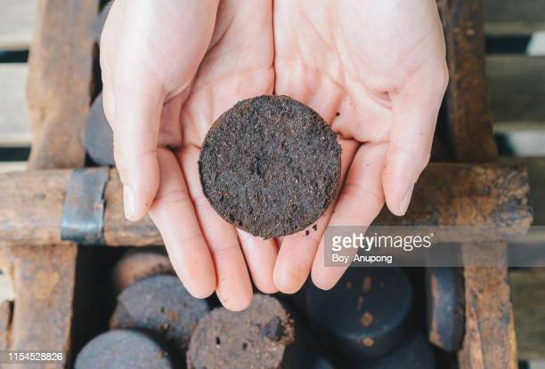 close-up of human hands holding a piece of old coffee grounds after it's brewed. - convenience stock pictures, royalty-free photos & images