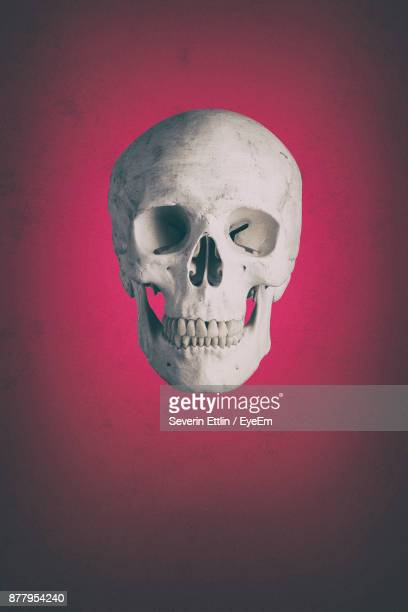 Close-Up Of Human Skull Against Pink Background