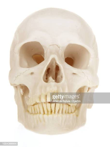 close-up of human skull against white background - human skull stock pictures, royalty-free photos & images