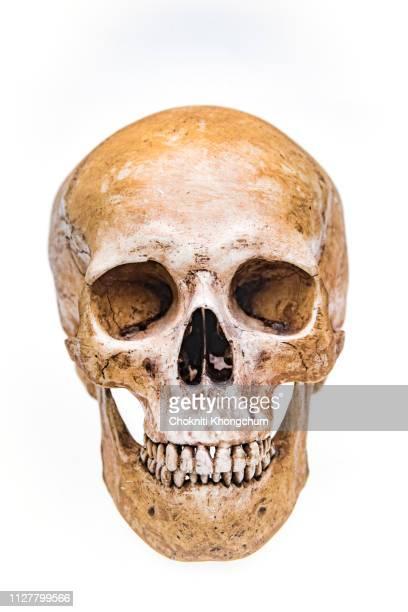 close-up of human skull against white background - crânio - fotografias e filmes do acervo
