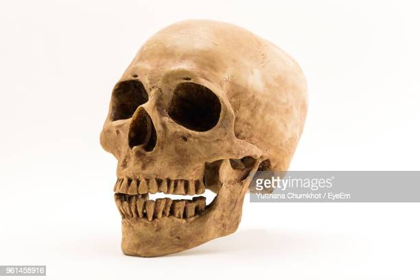 close-up of human skull against white background - human skeleton stock photos and pictures