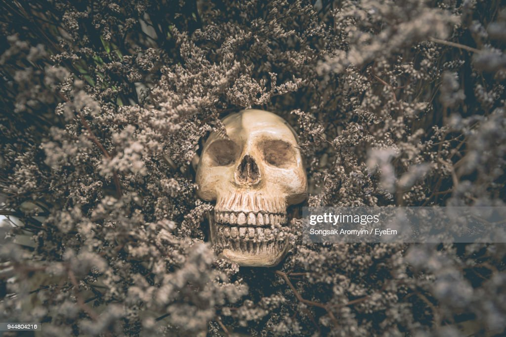 Close-Up Of Human Skull In Old Dried Flowers : Stock Photo