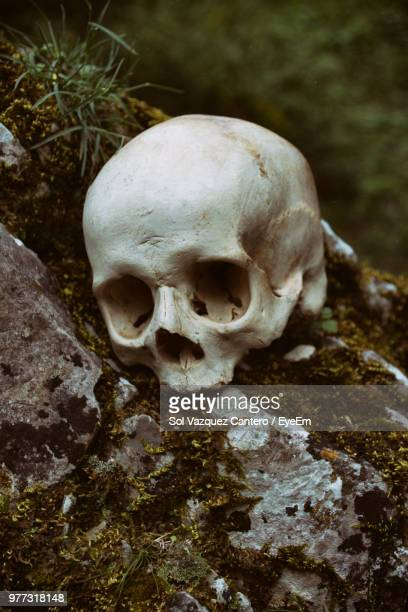 close-up of human skull on rock - skull stock photos and pictures