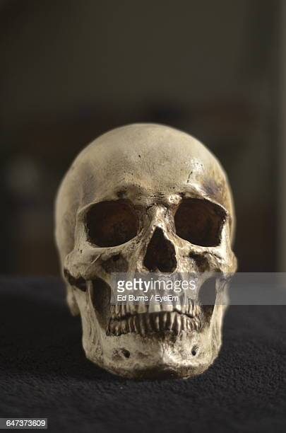 close-up of human skull on table - human skull stock pictures, royalty-free photos & images