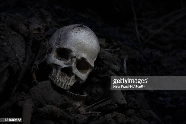 close-up of human skull - archaeology stock pictures, royalty-free photos & images