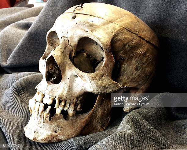 close-up of human skull - human skull stock pictures, royalty-free photos & images