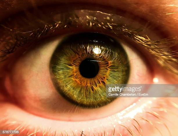 Close-Up Of Humans Eye