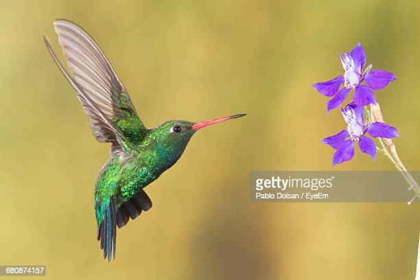 close-up of hummingbird flying in sky - hovering stock photos and pictures