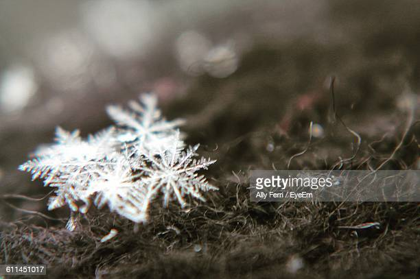 Close-Up Of Ice Crystals On The Ground