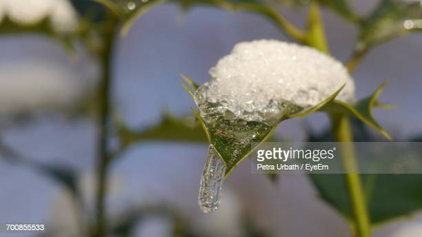 Close-Up Of Ice On Plant