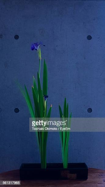 Close-Up Of Ikebana Plant Against Blue Wall