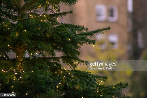 close-up of illuminated christmas tree - christmas tree stock pictures, royalty-free photos & images