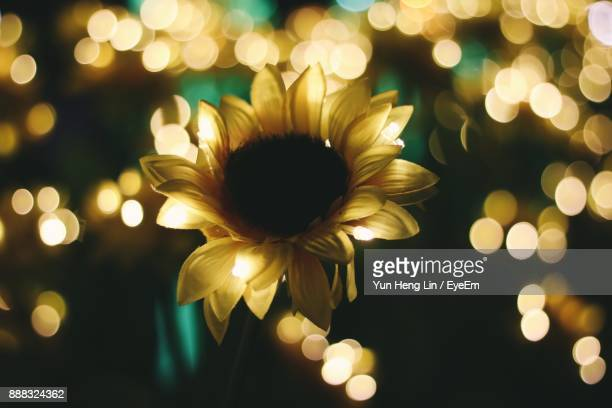 Close-Up Of Illuminated Flower Against Blurred Background