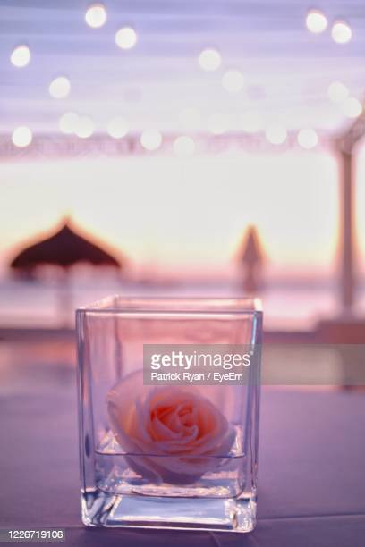 close-up of illuminated flower on table - oranjestad stockfoto's en -beelden