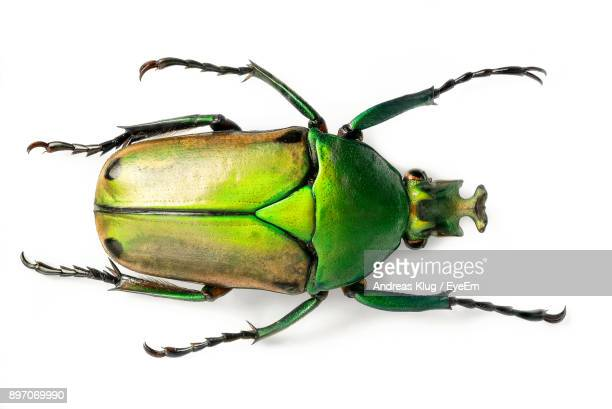 close-up of insect against white background - insect stock pictures, royalty-free photos & images