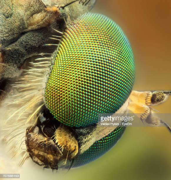 Close-Up Of Insect Eye