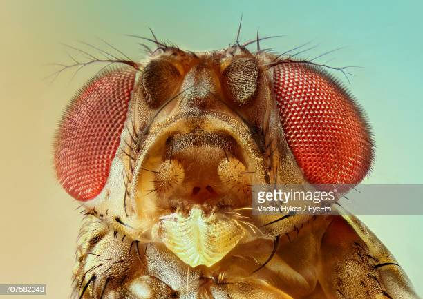 Close-Up Of Insect Head