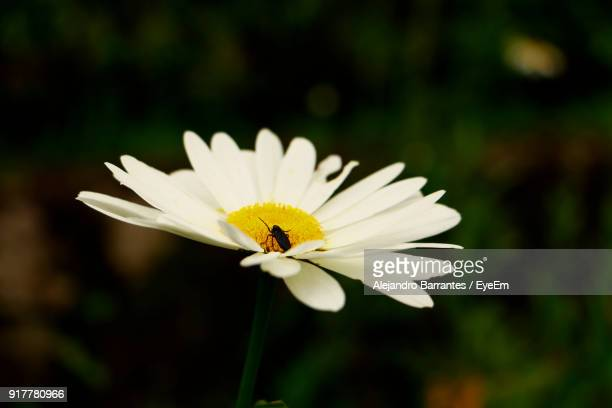 close-up of insect on daisy - {{relatedsearchurl('london eye')}} stock photos and pictures