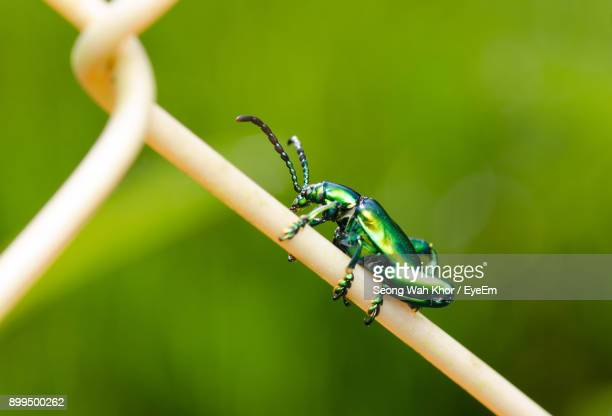 Close-Up Of Insect On Fence