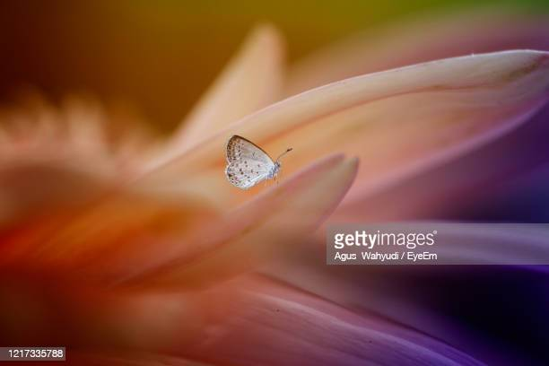 close-up of insect on flower - central kalimantan stock pictures, royalty-free photos & images