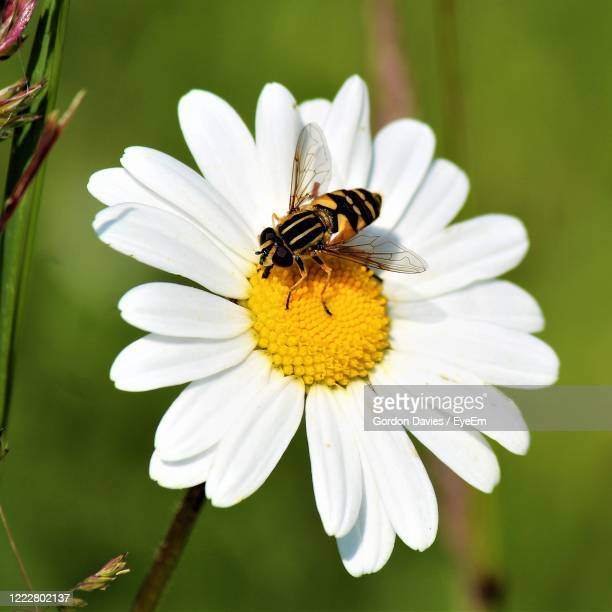 close-up of insect on flower - stockton on tees stock pictures, royalty-free photos & images