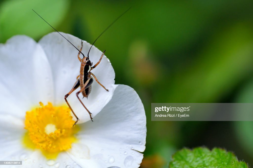 Close-Up Of Insect On Flower : ストックフォト