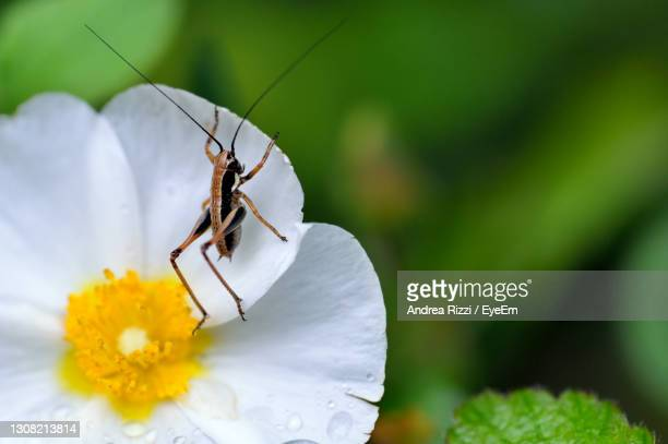 close-up of insect on flower - andrea rizzi foto e immagini stock