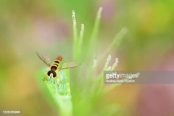 close-up of insect on flower - andrea rizzi stock-fotos und bilder