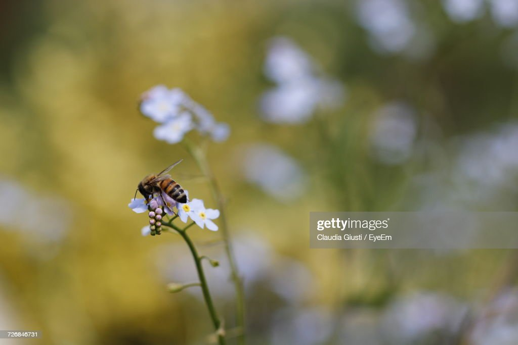 Close-Up Of Insect On Flower : Foto stock