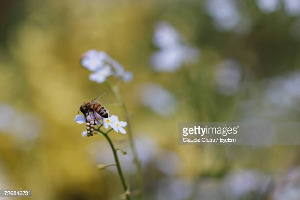 close-up of insect on flower - giusti claudia bildbanksfoton och bilder