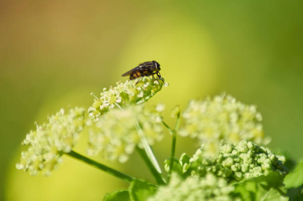 Close-up of insect on flower,Illes Balears,Spain