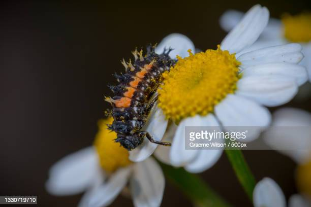 close-up of insect on flower,newcastle upon tyne,united kingdom,uk - newcastle united pictures stock pictures, royalty-free photos & images