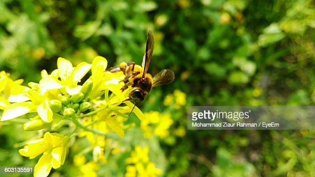 close-up of insect on flowers - ziaur rahman stock pictures, royalty-free photos & images